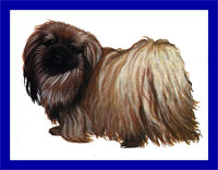 a well breed Pekingese dog
